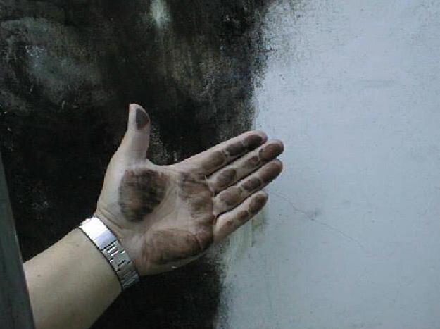 漆喰のかび汚れ