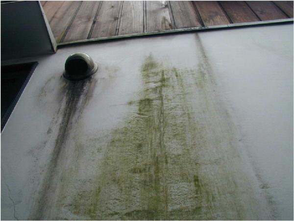 漆喰壁の苔類の発生。